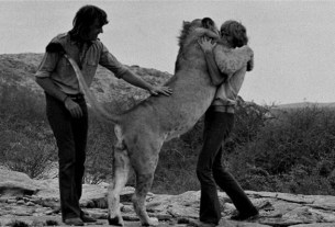 Christian The Lion hugs his two human friends in an emotional reunion