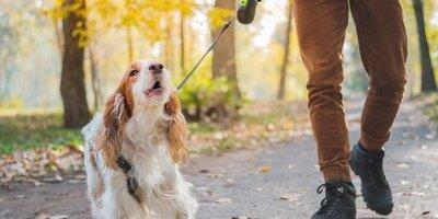 De drempel van je hond