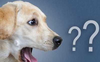HELP| Mijn hond luistert niet (meer)