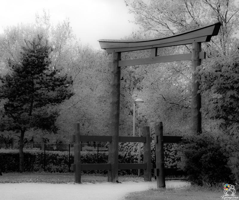 jardinjaponais - kyonyxphoto-serie-dijon-jardin-japonais-2.jpg