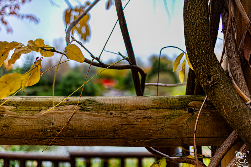 jardinjaponais - kyonyxphoto-series-dijon-jardin-japonais-17