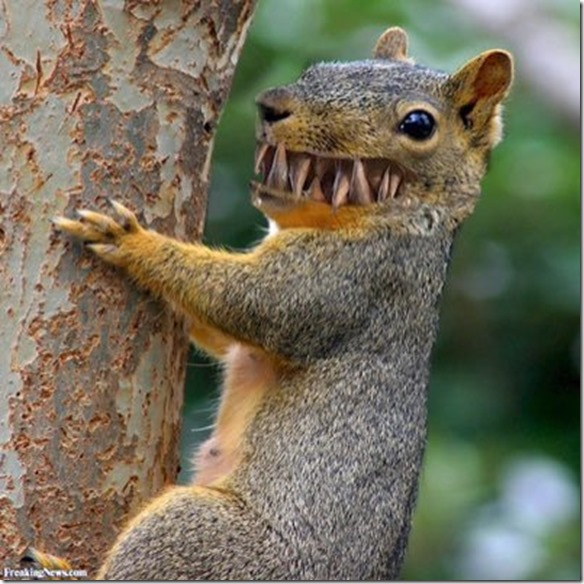 toothy squirrel