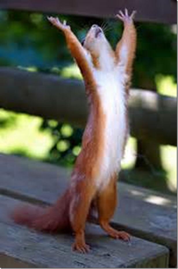 halliluah squirrel