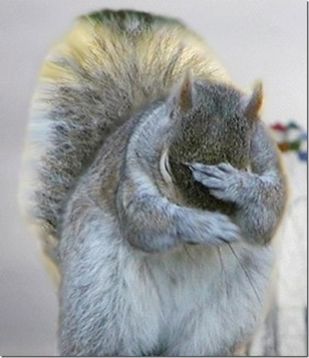 grey facepalm squirrel