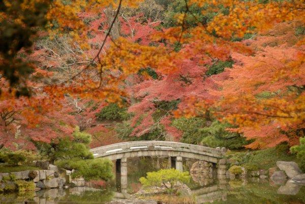Sento Gosho Palace Garden Autumn Foliage, Kyoto