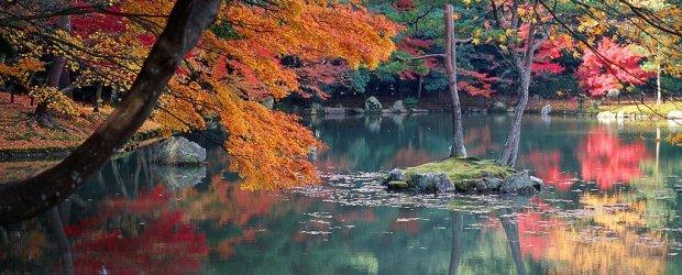 Autumn Leaves in Kyoto | Visit Kansai 2020