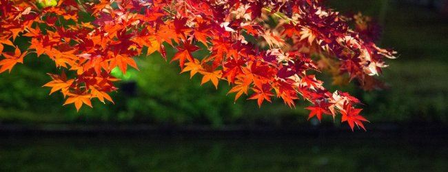 10 Best Places to See Autumn Leaves in Kyoto