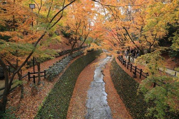 Kitano_Tenmangu_Shrine_Autumn_Leaves_Kyoto