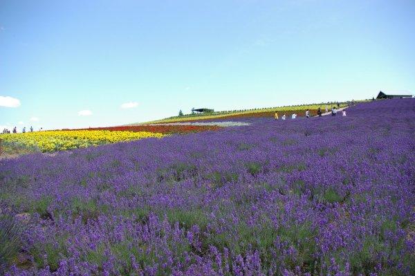 Flower_Land_Kamifurano_Hokkaido