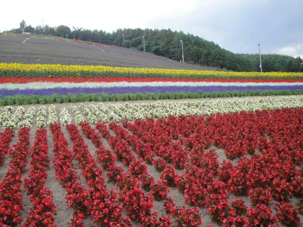 Nakafurano_Municipal_Lavender_Farm_Hokkaido