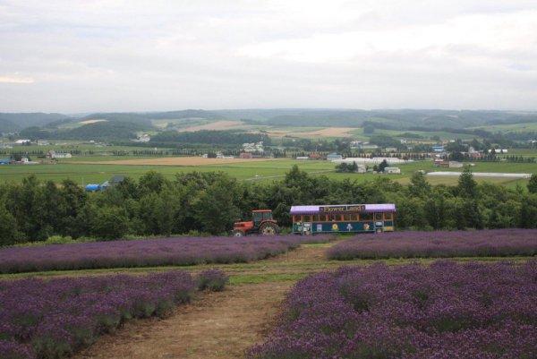 Tractor_Bus_Ride_Furano_Lavender_Garden_Hokkaido