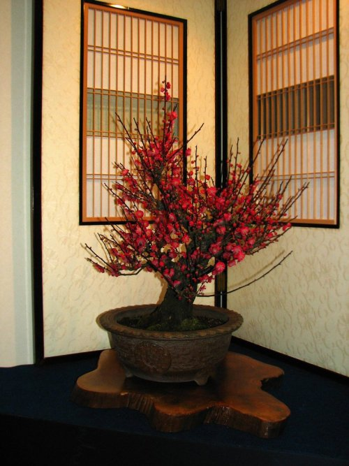 Red_Plum_Blossom_Bonsai