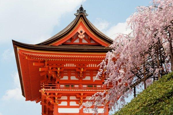cherry_blossoms_at_kiyomizudera_temple_kyoto