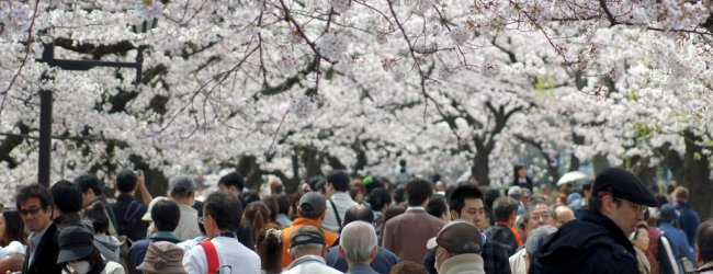 How to Enjoy Hanami in Japan | Travel Guide 2019