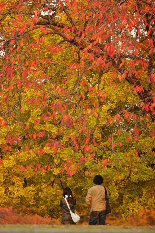 autumn_leaves_at_shinjuku_gyoen