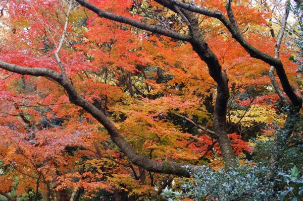 mount_mitake_autumn_leaves