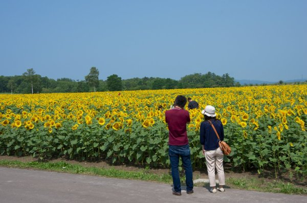 sunflower_village_himawari_no_sato