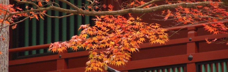 Autumn Leaves in Nikko | Visit Tochigi