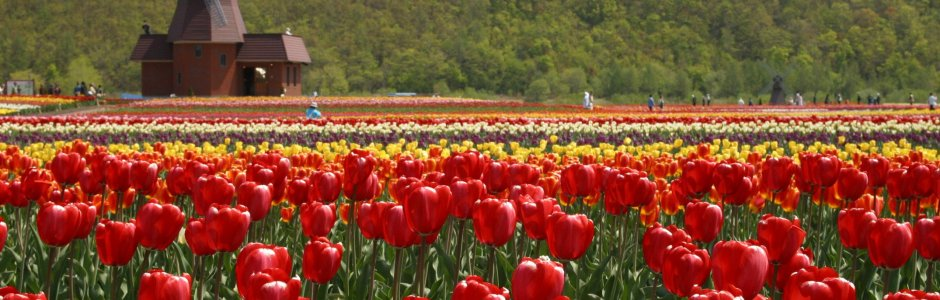 Kamiyubetsu Tulip Park | Tulip Fair 2020