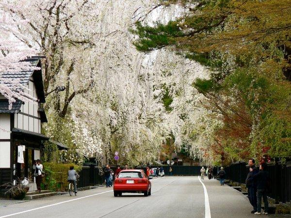kakunodate_samurai_district_in_spring_akita