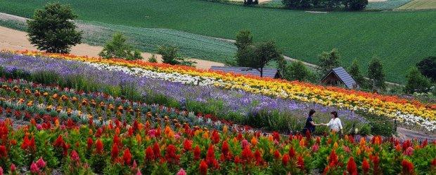 Hokkaido Summer Itinerary – Lavender Season