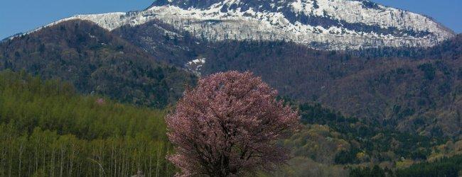 Hokkaido Spring Itinerary | Travel Plan 2019