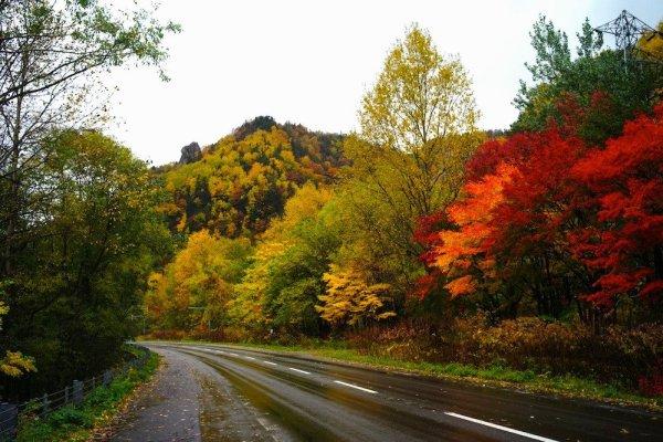 hokkaido_autumn_leaves_season