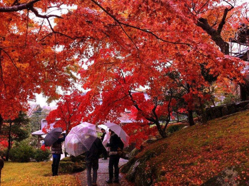 Autumn Leaves in Hakone 2019 | Visit Kanagawa | Kyuhoshi
