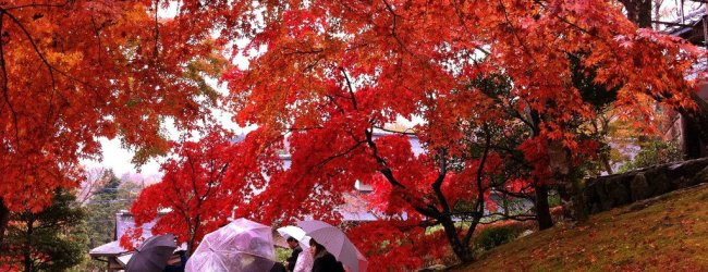 Autumn Leaves in Hakone 2019 | Visit Kanagawa