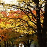 Hokkaido Autumn Itinerary | Travel Plan 2016
