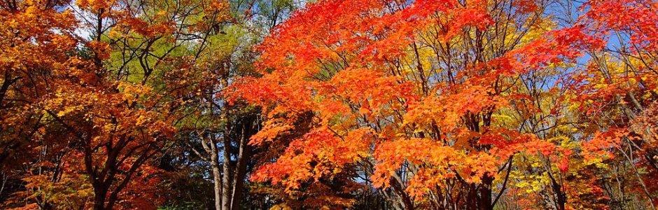 Hokkaido Autumn Itinerary | Travel Plan 2020
