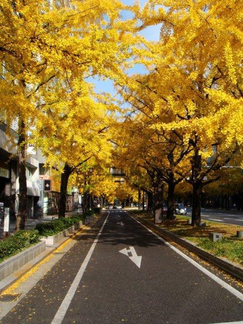 midosuji_street_osaka