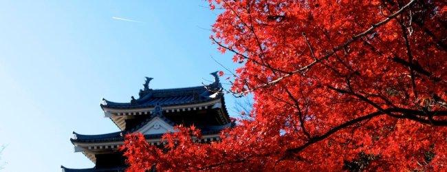 Autumn Leaves in Aichi   Koyo 2020