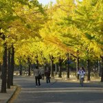 Autumn Leaves in Osaka |  Is it Worth a Visit?