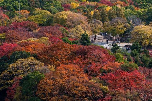 osaka_castle_park_in_fall