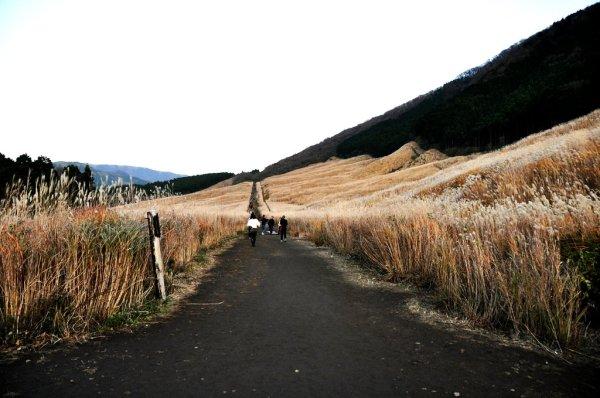 sengokuhara_pampas_grass_field_hakone