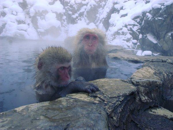 jigokudani_monkey_park