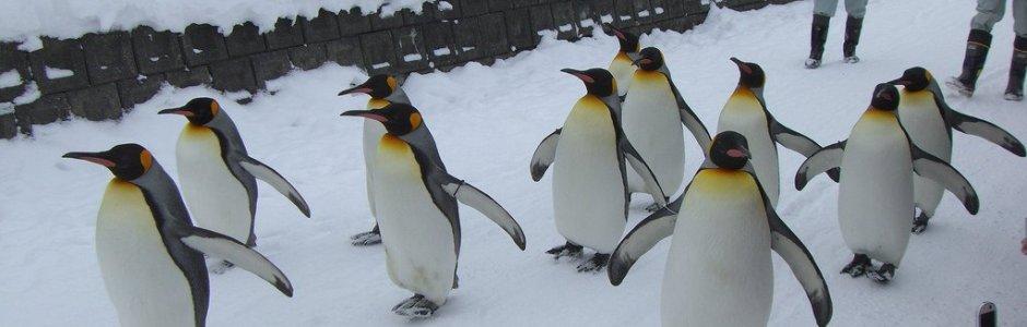Hokkaido Winter Itinerary | Travel Plan 2019