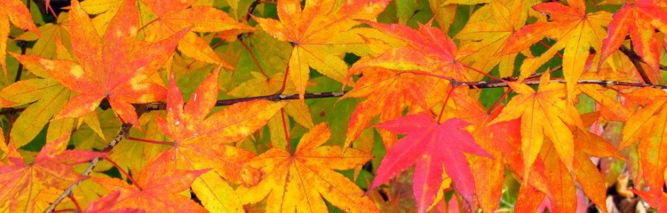 6 Best Places to See Autumn Leaves in Sapporo