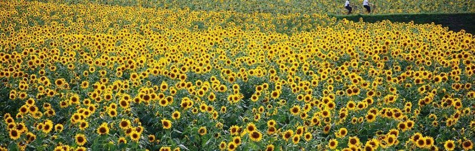 8-Day in Hokkaido Itinerary (August)