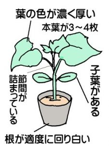 kyuri-nae (2)