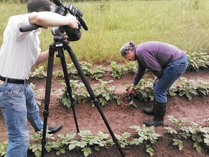 300x225 Potato under here, in Valdosta Farm Days â??Gretchen on WALB, by John S. Quarterman, for Lowndes Area Knowledge Exchange (LAKE), 2 May 2014