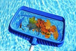 Feuilles dans la piscine
