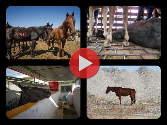 Vidéo de l'enquête chevaux