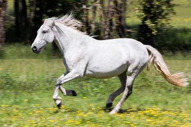 Equitation – La danse du centaure