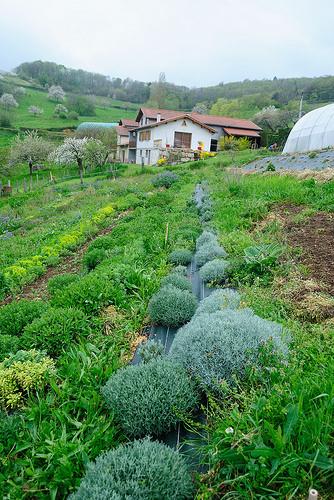Les plantes – La santé en douceur