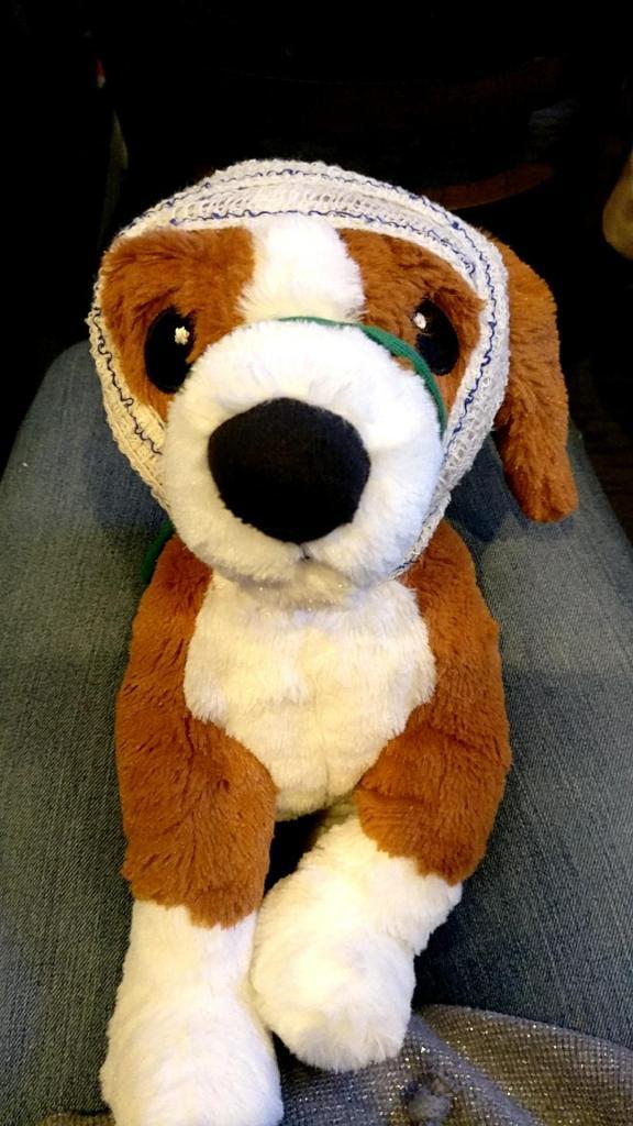 Formation de premiers secours canin et félin - La Box Naturelle 3