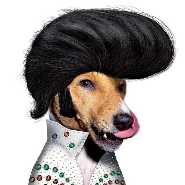 Elvis Presley en chien - Famous Faces