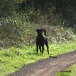 Promenade à la campagne