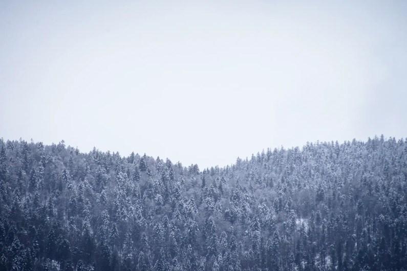 Eibsee lake trees snow